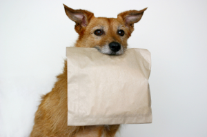 doggie-bag-resized-600